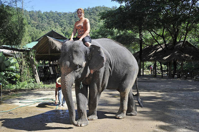 Volunteer in Thailand - Summer 2014